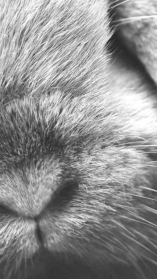 Cute Rabbit Nose Closeup iPhone 5 Wallpaper.jpg 640×1.136 píxeles