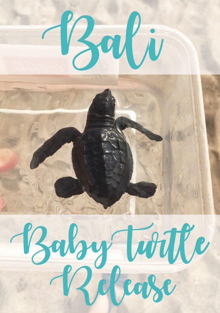 Releasing baby turtles on Kuta Beach in Bali!