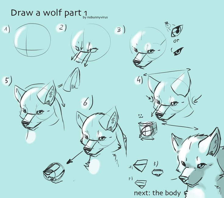 The Poorly Made Wolf Drawing Tutorial By Nobunnyvirus