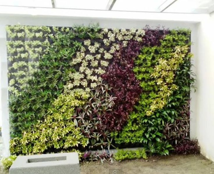 M s de 1000 ideas sobre muros verdes en pinterest - Plantas colgantes de exterior ...