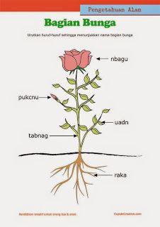 ilmu pengetahuan alam anak kelas 1 SD, menyusun huruf acak untuk tahu nama bagian bunga