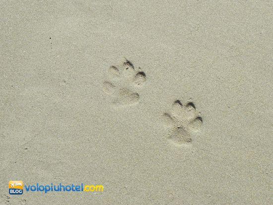 Oltre 25 fantastiche idee su tatuaggi da spiaggia su for Piccoli piani cottage sulla spiaggia