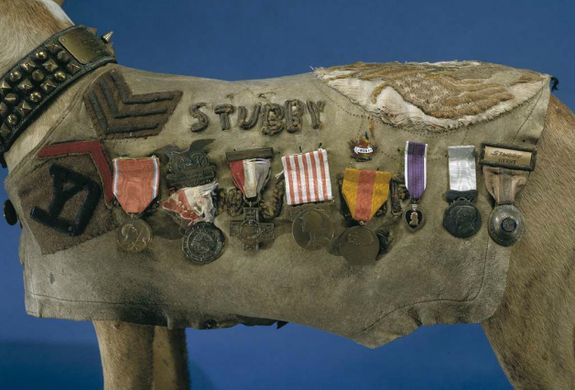 Sergeant Stubby – Washington, D.C. | Atlas Obscura