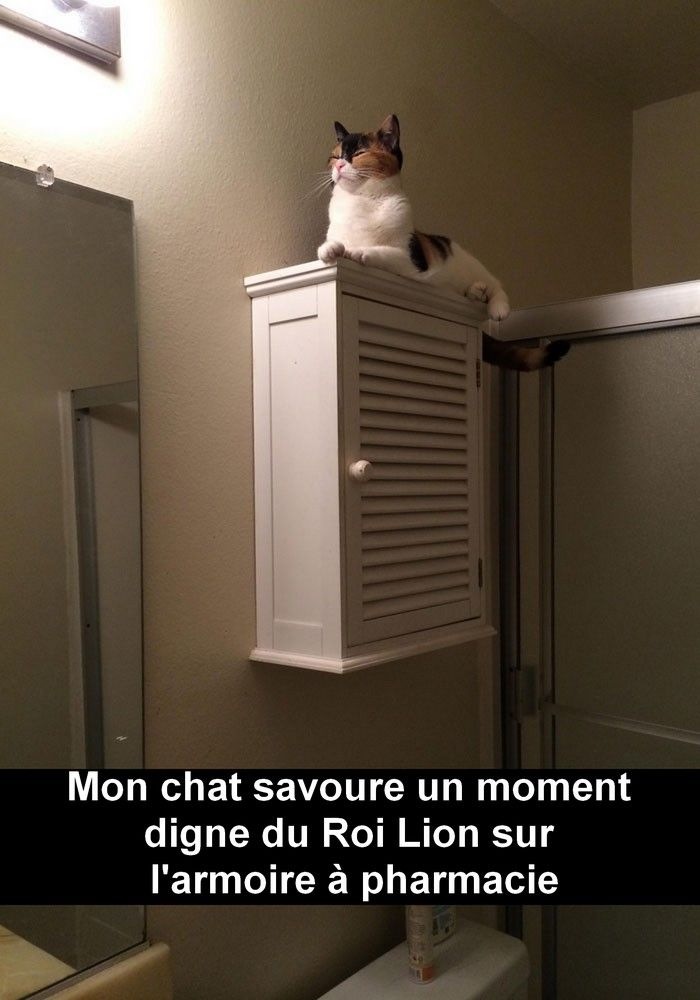 30 Snapchat de chats absolument hilarants - page 5