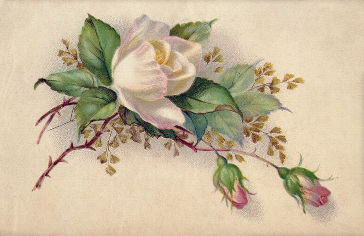 Открытки с цветами в стиле ретро