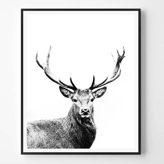Deer Print Black and White Photography Minimal by ScandiHomeDesign