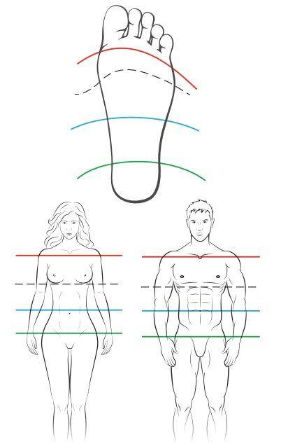 Рефлексология изучает воздействие на органы и системы организма человека через биологически активные точки и рефлекторные зоны.  Рефлексторные зоны расположены на различных участках тела человека, к ним можно отнести кисти, стопы, лицо, волосистую часть головы, зону радужки и ушную раковину.  Наиболее эффективен и доступен массаж рефлекторных зон стопы и ладоней. Воздействие на стопы безопасно, в то же время это приятно и достаточно эффективно.  Для того, чтобы научиться правильно делать…