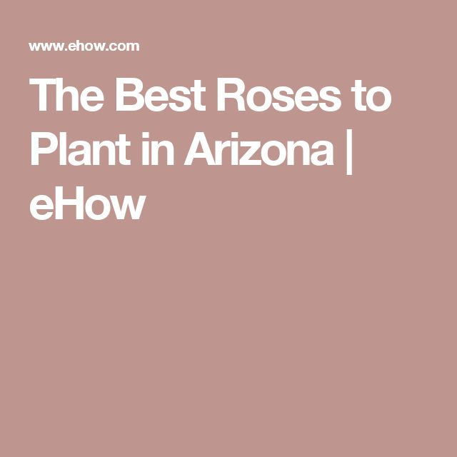 The Best Roses to Plant in Arizona | eHow