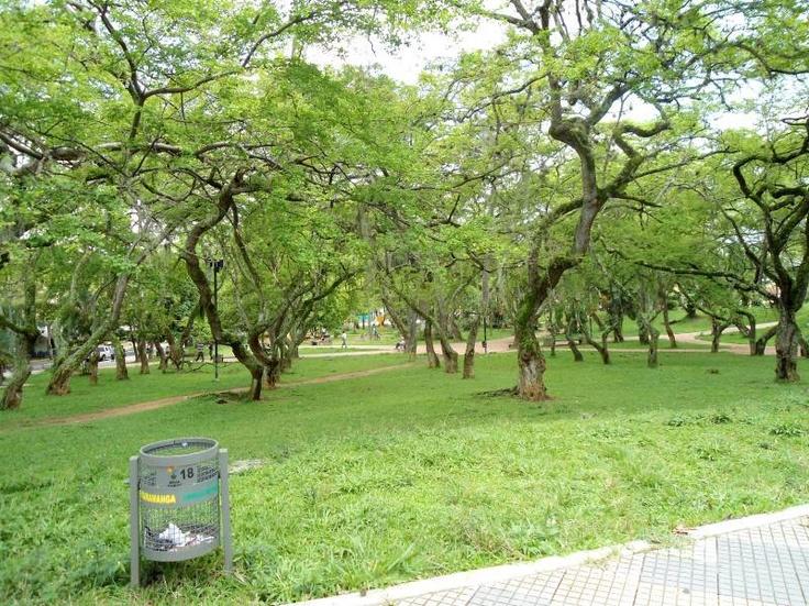 """El Parque San Pío es uno de los más importantes de Bucaramanga, se destaca por su frondosa vegetación, con espacios de sombra para descansar, hacer un picnic, leer o jugar. En medio del Parque se encuentra la escultura """"Mujer de Pie Desnuda"""" de Fernando Botero"""