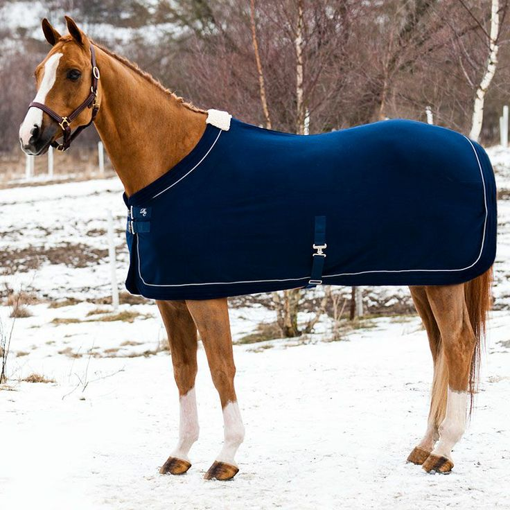 Stunning fleece rug your horse will love					Horze Edinburgh Fleece Rug is a high quality, gorgeous show blanket. This stylish Royal Equus sheet is