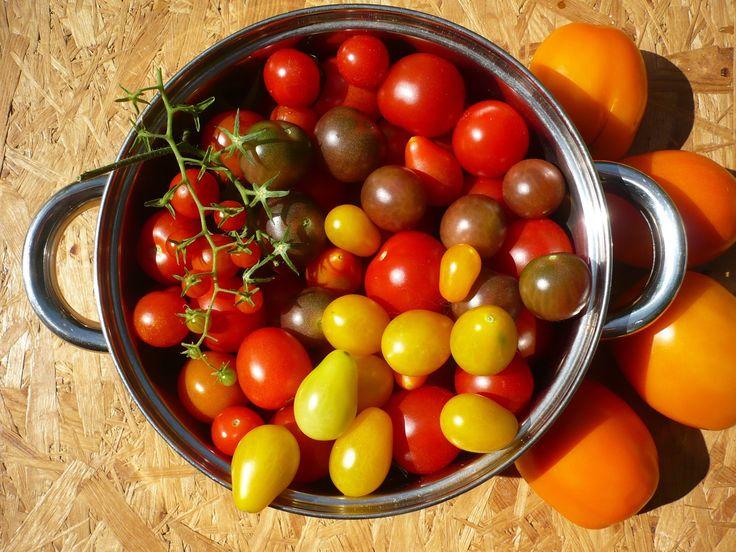 Rozsada Pomidorow Kiedy I Jak Siac Tomato Vegetables Food