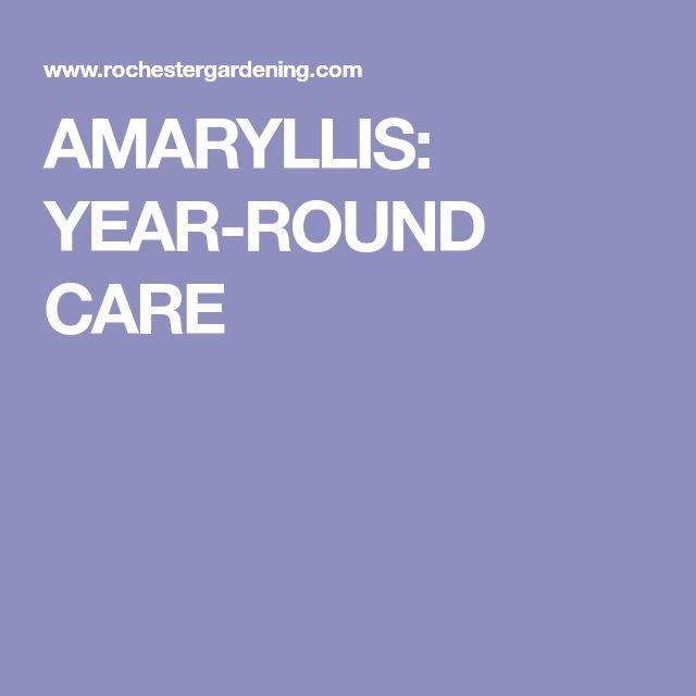 AMARYLLIS: YEAR-ROUND CARE