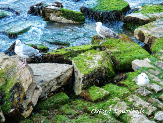 Swanage Dorset Seagulls Seaside Art Digital by OxfordDownloads