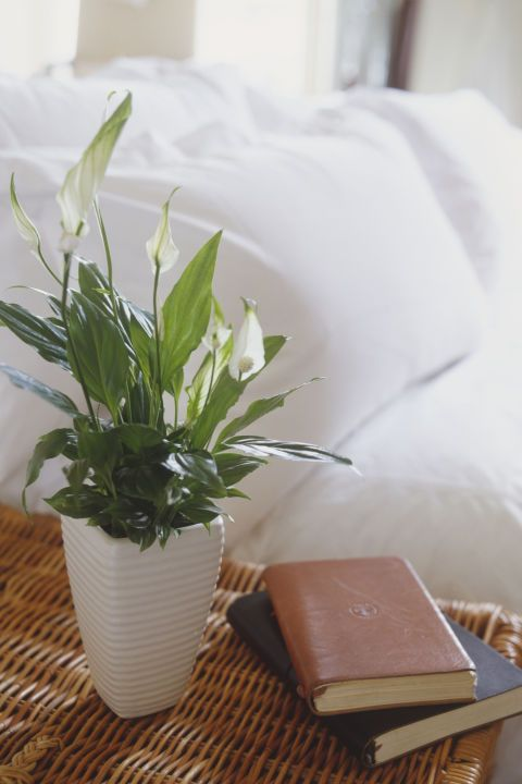 Peace Lily – Peace lilies can grow between 1 and 6 feet tall, so check the variety's estimated height before you buy. Bonus: These powerful plants can also filter toxins from the air, according to NASA. Click through for the entire gallery and for more indoor plants.