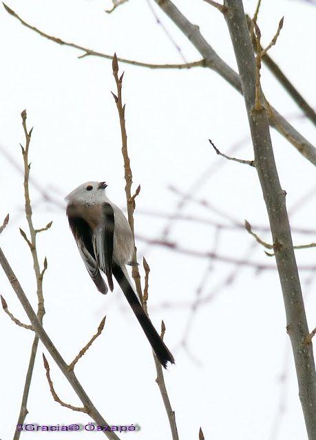 Kertünk madarai - kertem madarai: Őszapó az Újévi meglepetés