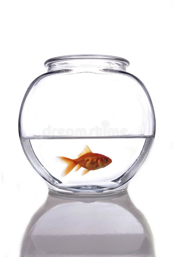 Fish A Goldfish In A Bowl Against A White Background Sponsored Goldfish Fish Bowl Background White Ad Goldfish Bowl Fish Stock Image