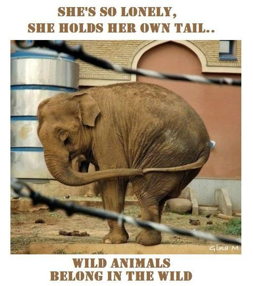 When I look at animals held captive by circuses, I think of slavery. Animals in circuses represent the domination and oppression we have fought against for so long. They wear the same chains and shackles. Breaks my heart