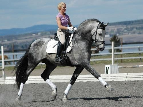 lladystoneheart:   yo gorgeous horse but how bout that girl's iron biceps?!