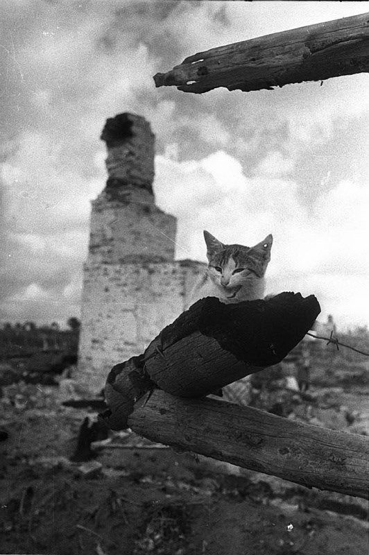 The only one survivor in a small village near Kaluga, Russia, 1941