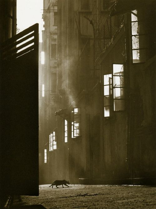 """The Search"" Author: Fan Ho (Chinese, born 1937) Date: 1960"
