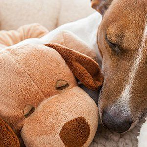 Does your dog often vomit bile? Here are some changes that you can make to his diet to help reduce these bouts of vomiting. Do you often find your dog vomiting bile? While this can be a very scary situation, there are many things you can do to reduce these ...