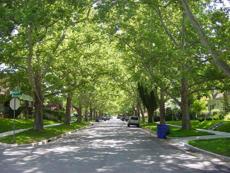 Street Tree Street Tree Lined Tree Lined Streets