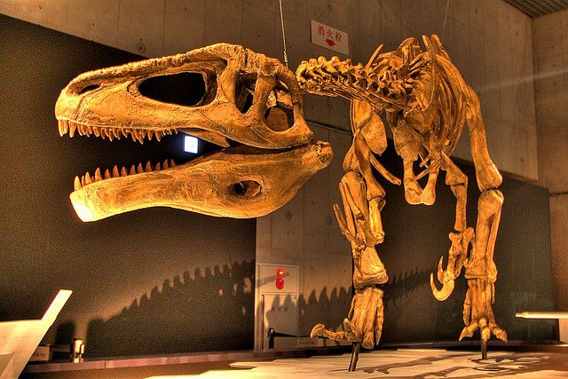 Visit the National Museum of Nature and Science in Tokyo http://thingstodo.viator.com/tokyo/national-museum-science-tokyo/