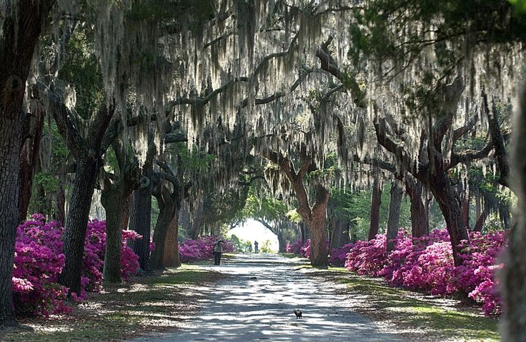 Frosty winter leads to pollen aplenty in Savannah