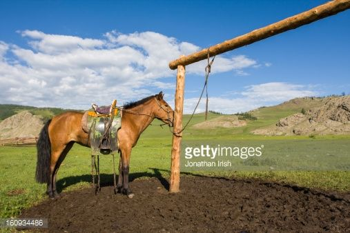 Stock Photo : A horse wearing a saddle tied up to a hitching post.