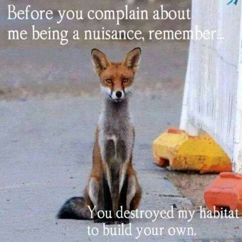 Before you complain about me being a nuisance, remember ... You destroyed my habitat to build your own.
