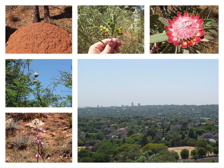Melville koppies, Johannesburg, South Africa