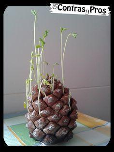 Juntar lentejas con una piña. Actividad para niños. Crafts for kids!