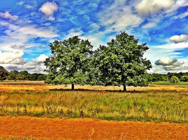Cycling in Richmond Park, London - it could be Africa with those colors!