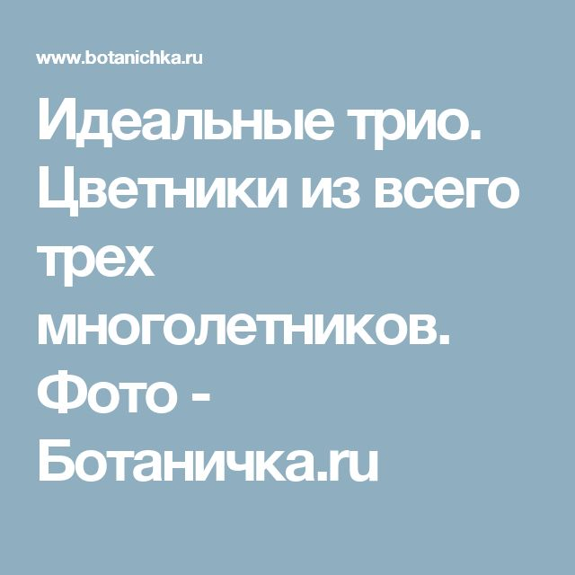 Идеальные трио. Цветники из всего трех многолетников. Фото - Ботаничка.ru
