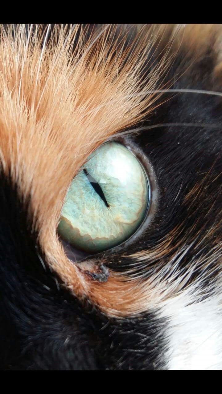 Cat eye like a ametyst