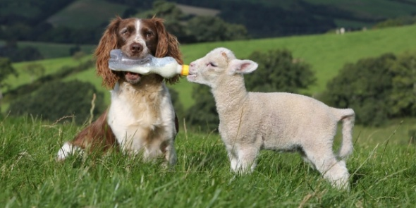 Hehe awww... Caught Being Godly: 3 Adorable Videos of God's Creatures and Their Acts of Kindness #adorable #animals