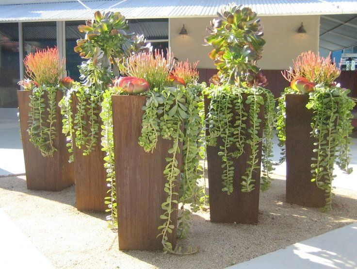Beautiful Tall Patio Pots Succulents Including Trailing Succulents In Corten Steel Planters Succulent Landscape Design Plants Succulent Landscaping