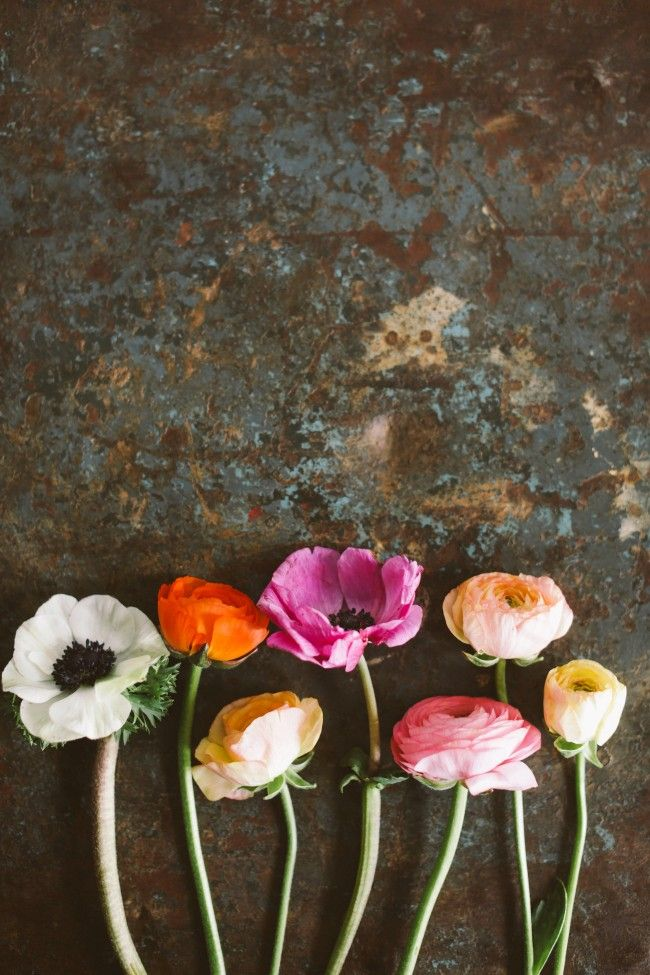 Lovely anemones against a stone background