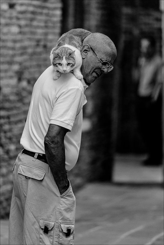 CatMan #photo #foto #cat