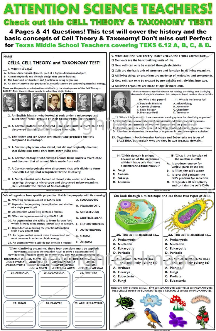 Best 25 cell theory ideas on pinterest life cell passive test basics of cells cell theory and taxonomy robcynllc Images