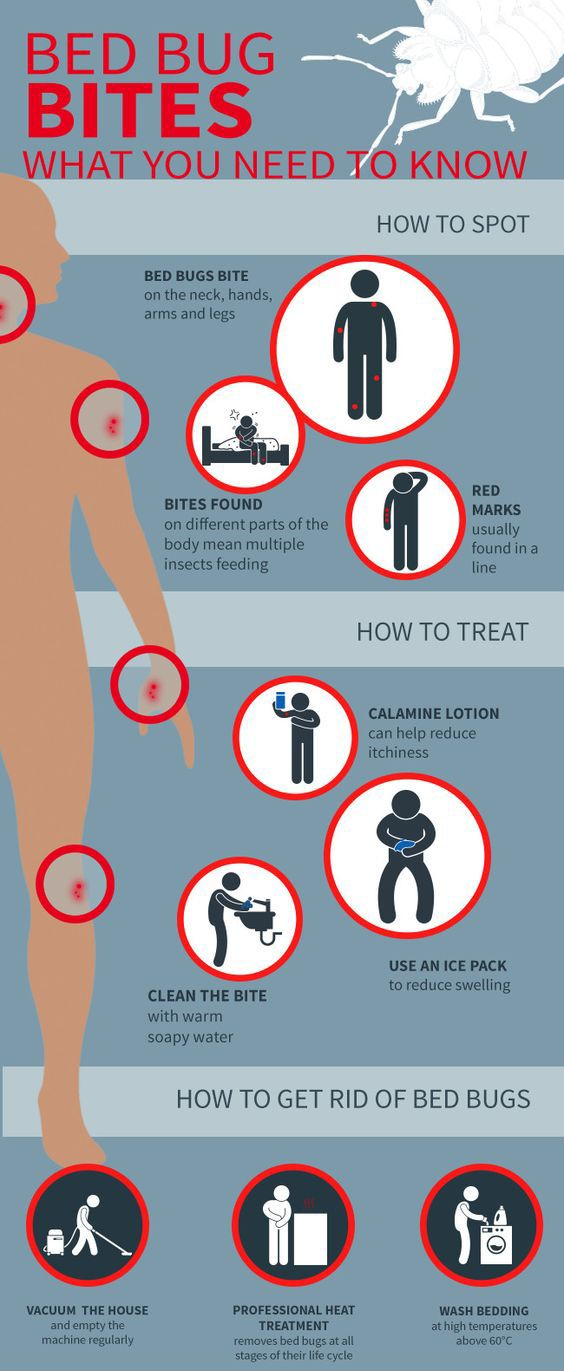 the 25+ best bed bug spray ideas on pinterest | bed bugs, bed bug