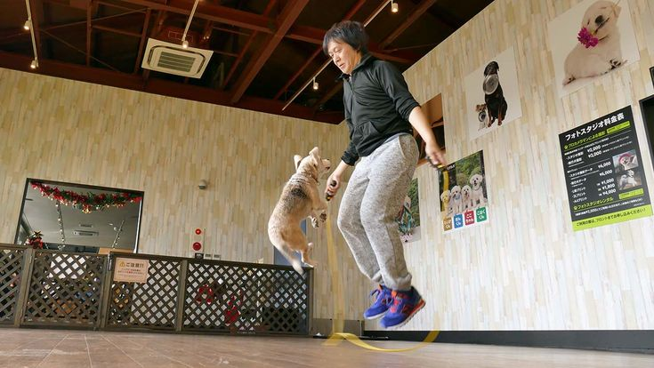 A 11 year old dog and his owner sets Guinness world Record for Skipping with Single Rope in one minute they did maximum 58 number of jumps