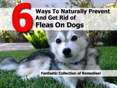 Natural Remedies For Disc Disk Disease In Dogs