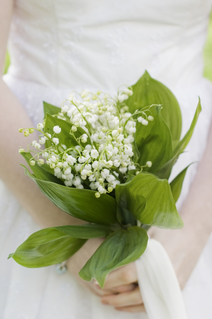 167 best violets and lily of the valley images on pinterest lily of the valley izmirmasajfo