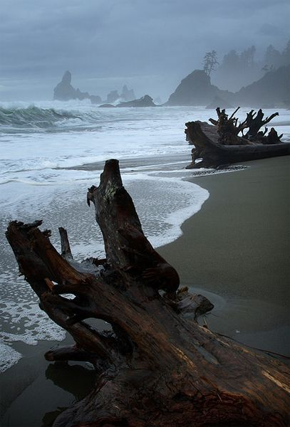overnight camping trip to Shi Shi Beach at the pacific coast of the Olympic Peninsula could be a considerable option for you. Shi Shi is one of the most scenic and most gorgeous beaches in Washington state bounded with beautiful sea stacks, tide pools and caves