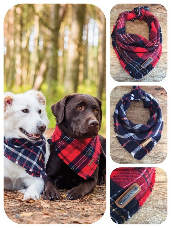 Coco + Pistachio saved to Coco + Pistachio Lennan and Amadeo, from the AW 2016 Collection at Coco + Pistachio   Fine Pet Accessories, Red Plaid Style, Navy Plaid Tartan Style, Dog Bandanas, Fall - Winter Dog Fashion   Dog Accessories