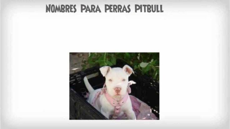 Aqui Nombres Para Perras Pitbull