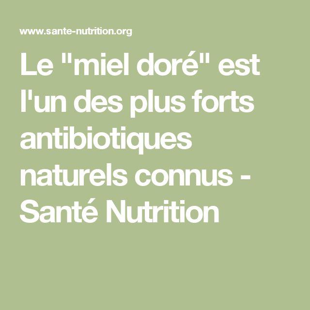 """Le """"miel doré"""" est l'un des plus forts antibiotiques naturels connus - Santé Nutrition"""