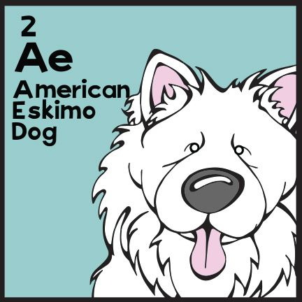 The 2nd  Elemutt of The Dog Table is the American Eskimo.  The Dog Table Poster features illustrations of 186 dog breeds. Dogs are organized in a similar layout and structure to the Periodic Table.  #dogsofpinterest #AmericanEskimo BUY THE DOG TABLE POSTER  http://thedogtable.com