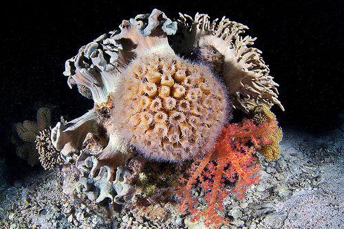 Coral 2 | Alexander Semenov | Flickr